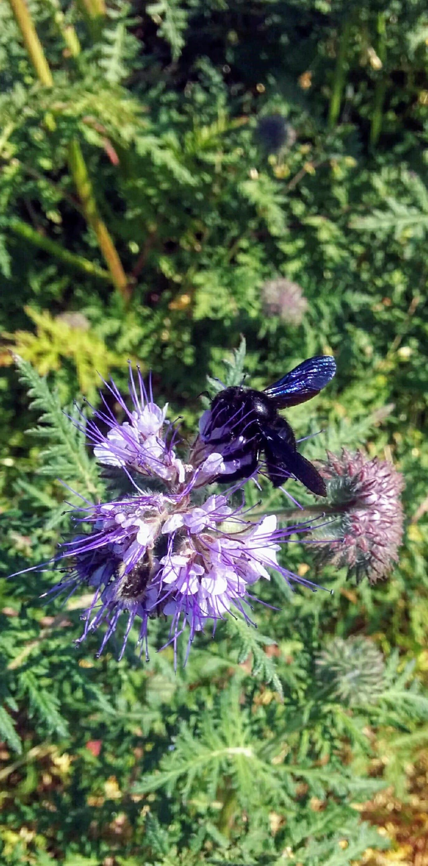 biodiversity in WASSMANN biodynamic wine estate