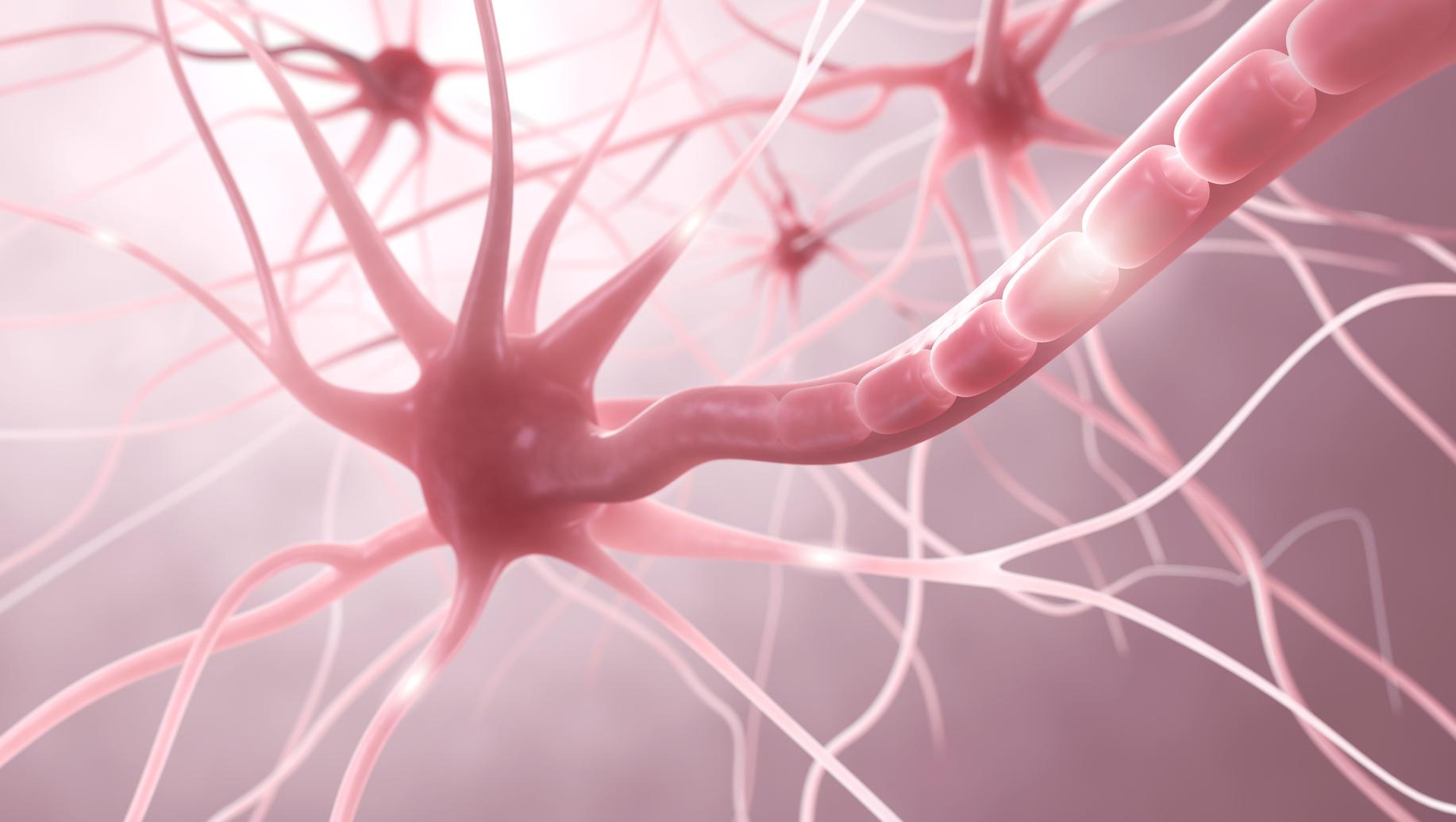 Fortbildungen in der Neurorehabilitation