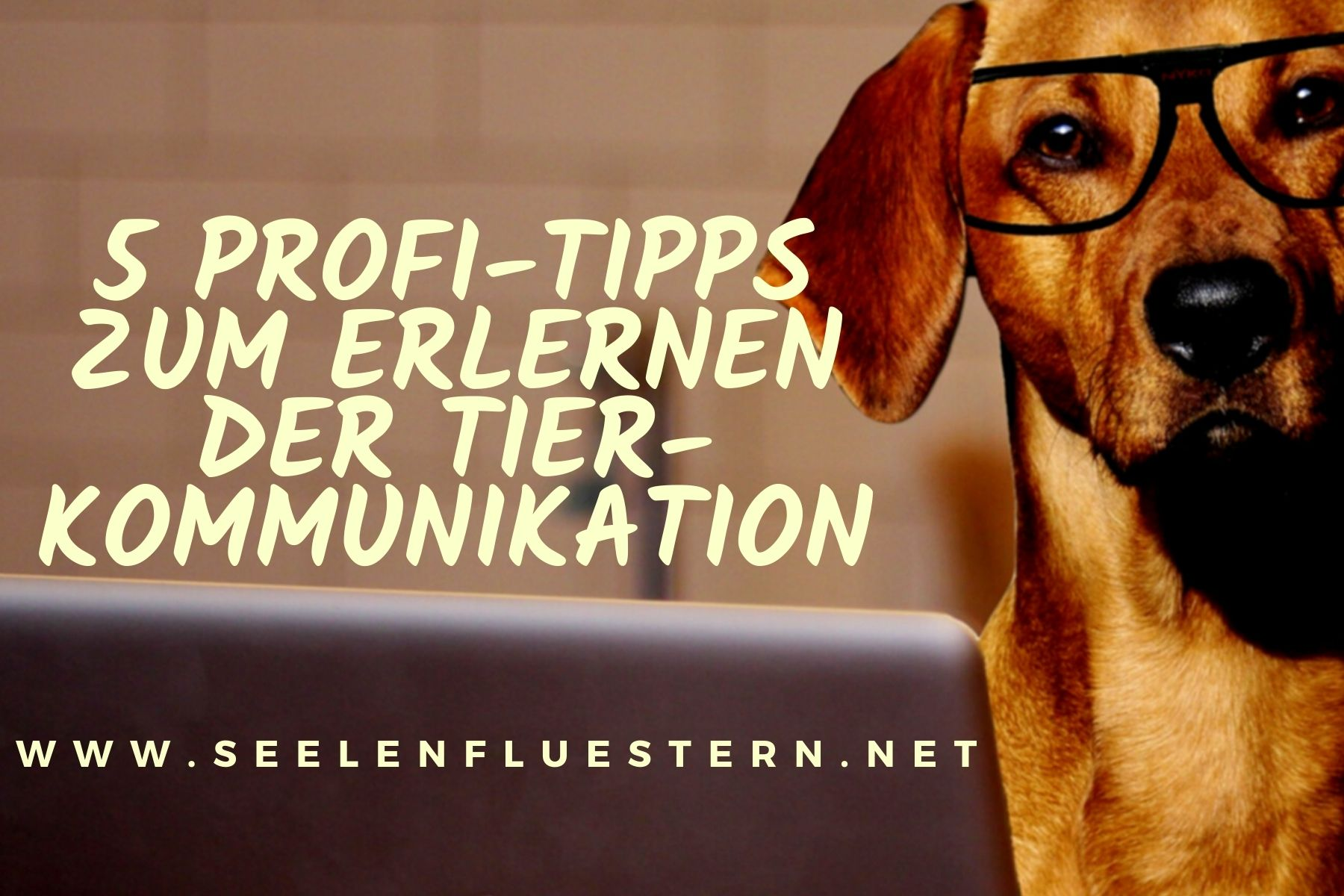 5 Profi Tipps
