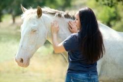 Energiearbeit mit einem Pferd