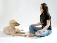 Kommunikation mit einem Hund