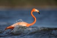 Krafttier Flamingo