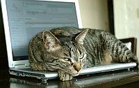 Katze liegt auf Notebook