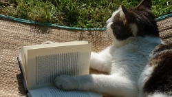 Katze liest ein Buch