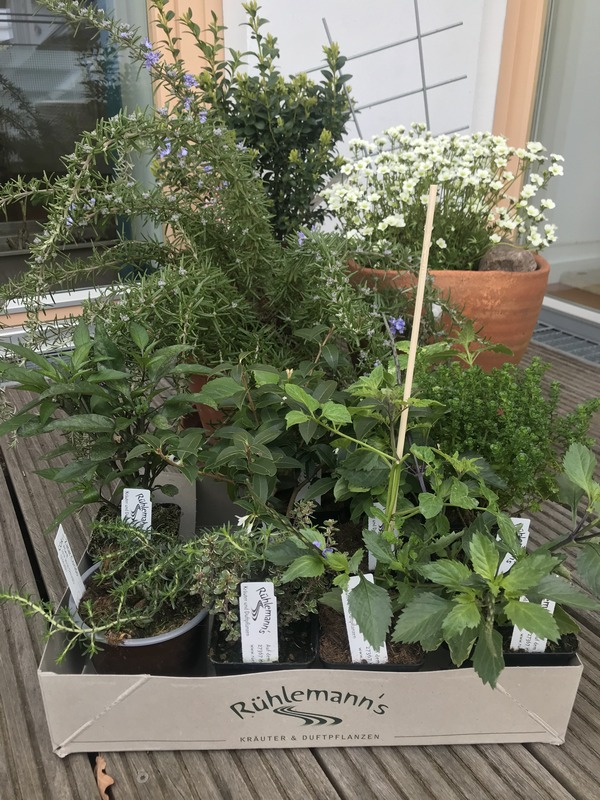 Rühlemann´s Kräuter & Duftpflanzen