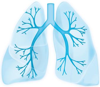Lunge - Bild von Webseite der Stiftung AtemWeg - s.u.
