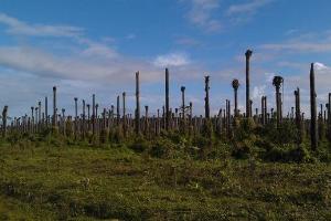 Palmöl-Themenwoche