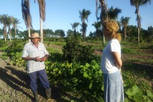 Besuch auf einer Orangenplantage