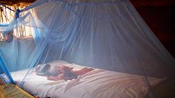 Child sleeping under mosquito net