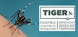 TIGER Closing Symposium, 13 November 2020