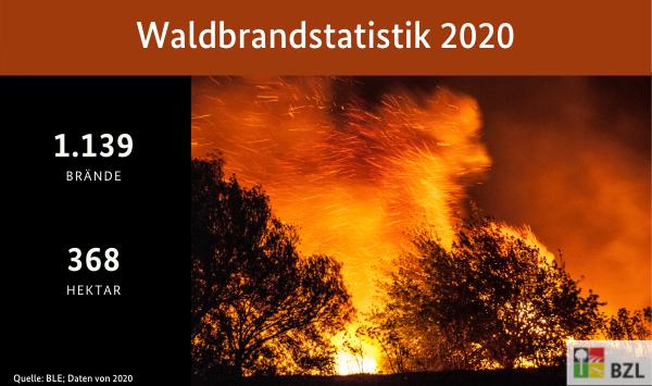 Waldbrandstatistik 2020. Bild eines brennenden Wald. Zahlen: 1139 Waldbrände auf 368 Hektar