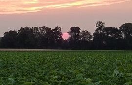 Acker mit Bäumen während des Sonnenuntergangs