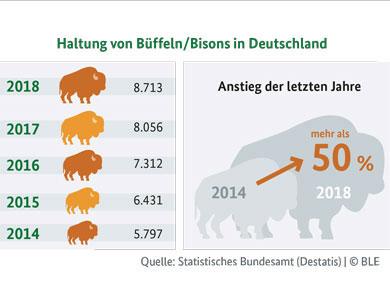 Infografik: Haltung von Büffeln/Bisons in Deutschland