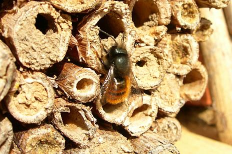 Bienen Nisthilfe