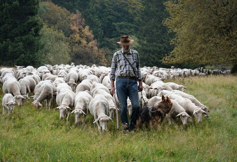 Schaf schafft Landschaft