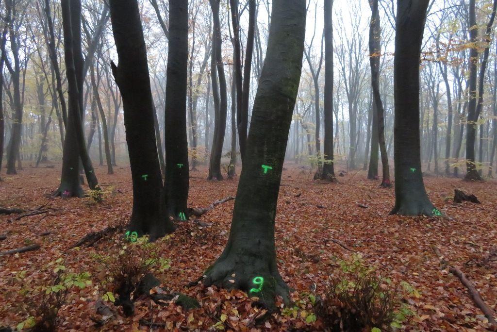 Wald Marteloscop
