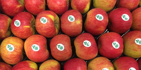 Äpfel mit Stickern des Biozyklisch-veganen Anbaus. Foto: Förderkreis Biozyklisch-Veganer Anbau e. V.