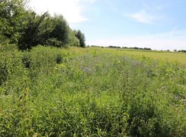 Ackerbegleitflora, daneben eine Feldrand-Hecke, im Hintergrund ein Acker.