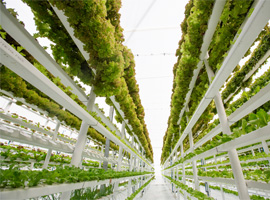 Vertikale Farm. Foto: LouisHiemstra / iStock / Getty Images Plus via Getty Images