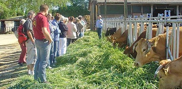 Fressende Kühe mit Bauer und Besuchergruppe. Foto: Andreas Greiner