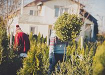 Mann trägt Weihnachtsbaum / Foto: M_a_y_a / iStock / Getty Images