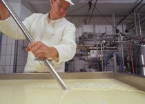 Käser durschneidet Masse mit der Käseharfe. Foto: Dominic Menzler, BLE